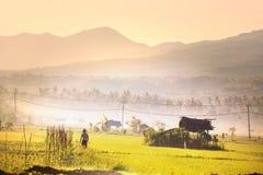 Feld in Indonesien lizenzfreies stockbild