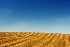 Feld-Landschaft Stockbilder
