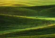 Feld malerisches hügeliges Feld Landwirtschaftliches Feld im Frühjahr Lizenzfreies Stockbild