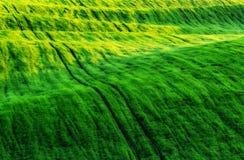 Feld malerisches hügeliges Feld Landwirtschaftliches Feld im Frühjahr Lizenzfreie Stockbilder
