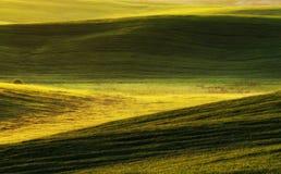 Feld malerisches hügeliges Feld Landwirtschaftliches Feld im Frühjahr Stockfoto