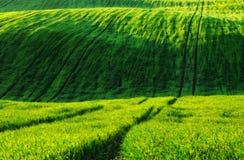 Feld malerisches hügeliges Feld Landwirtschaftliches Feld im Frühjahr Lizenzfreie Stockfotos