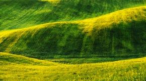 Feld malerisches hügeliges Feld Landwirtschaftliches Feld im Frühjahr Stockbild
