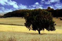 Feld in Mallorca Stockbilder