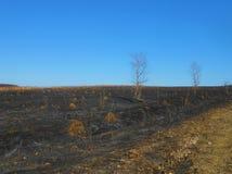 Feld mit Ameisenhaufen Stockfotos