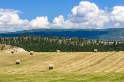 Feld mit Ballen des Heus und des blauen Himmels mit Wolken Lizenzfreie Stockbilder