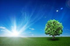 Feld mit Baum und blauem Himmel Stockfoto