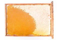Feld mit Bienenwaben und Honig Lizenzfreie Stockbilder