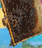 Feld mit Bienenwaben und vielen Kriechenbienen Lizenzfreie Stockfotos