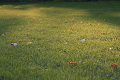 Feld mit Blättern Lizenzfreies Stockfoto
