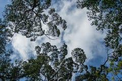 Feld mit Blättern und Himmel Stockfoto