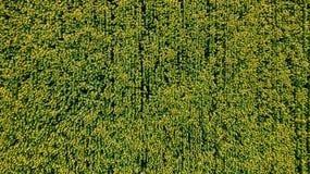 Feld mit blühenden Sonnenblumen Schattenbild des kauernden Geschäftsmannes oberseite Von oben Stockfotos