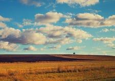 Feld mit blauem bewölktem Himmel Stockfotografie