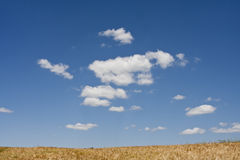 Feld mit blauem Himmel Lizenzfreies Stockbild