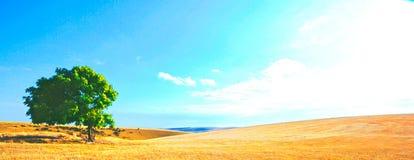 Feld mit blauem Himmel Lizenzfreie Stockbilder