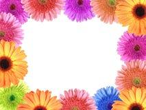 Feld mit Blumen Lizenzfreie Stockbilder