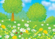 Feld mit Blumen Stockbild