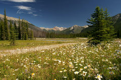 Feld mit Blumen Stockfotografie