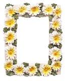 Feld mit Blumen auf weißem Hintergrund Lizenzfreie Stockbilder