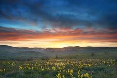 Feld mit Blumen und drastischem Himmel Stockbilder