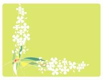 Feld mit Blumen und Zeilen Stockfoto