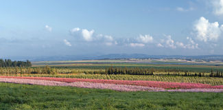 Feld mit bunten Streifen der Blumen Stockfoto
