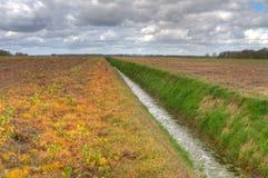 Feld mit dem Abzugsgraben, Unkraut und Ernte getötet durch Herbizid Lizenzfreie Stockbilder