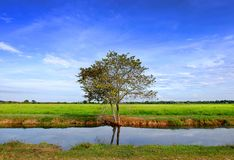 Feld mit dem blauen Himmel lizenzfreie stockfotografie