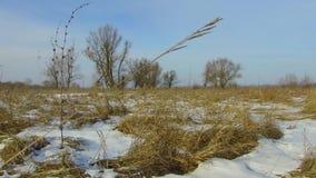 Feld mit dem Gras draußen eingefroren und Schnee weg Baumwinterlandschaft-steadicam Russlands totem stock video