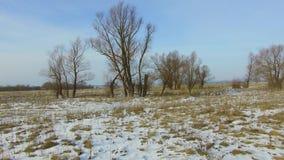 Feld mit dem Gras draußen eingefroren und Schnee weg toten Bäumen Russlands das Winterlandschaft-steadicam stock footage