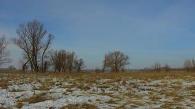 Feld mit dem Gras weg eingefroren und Schnee das Baumwinter-Landschaft-steadicam Russlands absolut draußen stock video footage
