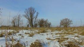 Feld mit dem Gras weg eingefroren und Schnee das Baumwinter-Landschaft-steadicam Russlands draußen tote stock footage