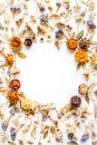 Feld mit den gelben trockenen Blumen, Niederlassungen, Blättern und den Blumenblättern lokalisiert auf weißem Hintergrund Lizenzfreies Stockfoto