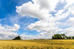 Feld mit einem blauen Himmel Lizenzfreie Stockfotografie