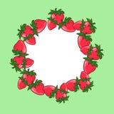 Feld mit Erdbeeren Lizenzfreie Stockbilder