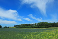 Feld mit Ernten im Sommer Stockbilder