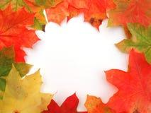 Feld mit farbigen Herbst-Ahornblättern Stockbild