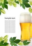 Feld mit frischen Hopfenzweigen und -bier Stockbild