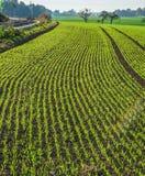 Feld mit frischen Samen im Herbst stockfotografie