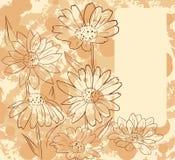 Feld mit Gänseblümchen Stockfoto