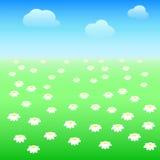 Feld mit Gänseblümchen Stockfotografie
