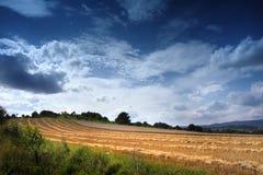 Feld mit gehauenem Mais und Wolken Stockfoto