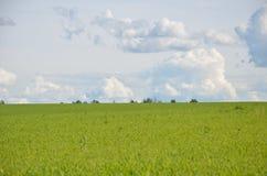 Feld mit gelbem Löwenzahn und blauem Himmel Lizenzfreies Stockbild
