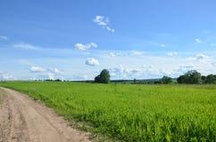 Feld mit gelbem Löwenzahn und blauem Himmel lizenzfreies stockfoto