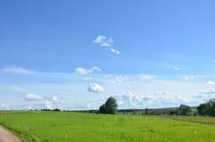 Feld mit gelbem Löwenzahn und blauem Himmel lizenzfreie stockbilder