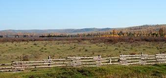 Feld mit gemähtem Gras lizenzfreies stockbild