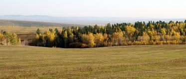Feld mit gemähtem Gras lizenzfreies stockfoto