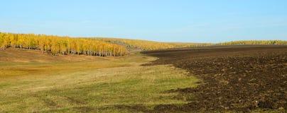 Feld mit gemähtem Gras stockbilder