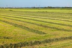 Feld mit gemähtem Gras im Polder, die Niederlande Lizenzfreies Stockbild