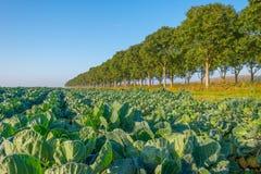Feld mit Gemüse im Herbst Lizenzfreies Stockfoto